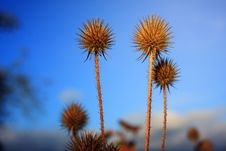 Free Selective Focus Photography Of Spikey Brown Plants Stock Images - 117689114