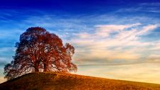 Free Tree On Top Of Hill Under Blue Sky Stock Photo - 117689120