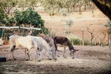 Free Two White And Two Brown Donkeys Near Plants Stock Photos - 117689303
