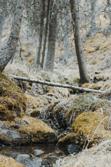 Free Forest And Body Of Water Stock Images - 117689344