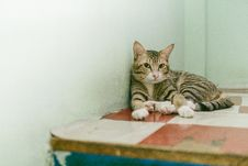 Free Adult Brown Tabby Cat Reclining On Table Stock Photos - 117689453