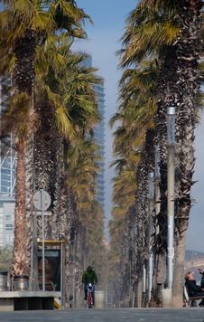 Free Tree, Palm Tree, Arecales, Date Palm Royalty Free Stock Photos - 117728648