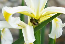 Free Yellow, Bee, Flower, Honey Bee Stock Photography - 117728662