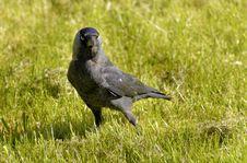 Free Bird, Fauna, Grass, Ecosystem Royalty Free Stock Photos - 117729148