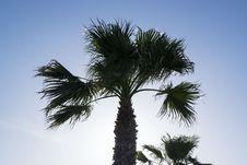 Free Tree, Sky, Borassus Flabellifer, Palm Tree Royalty Free Stock Images - 117729339