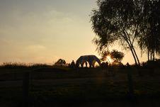 Free Sky, Tree, Morning, Sunrise Royalty Free Stock Photo - 117729525