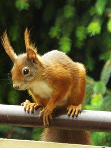 Free Squirrel, Fauna, Mammal, Fox Squirrel Royalty Free Stock Photo - 117729675