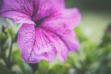 Free Photography Of Shallow Focus Purple Flowers Stock Photography - 117767872