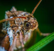 Free Macro Photo Of Brown Moth Stock Photos - 117767933