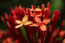 Free Photo Of Red Petaled Flowers Stock Image - 117768061