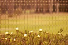 Free Selective Focus Photo Of White Flowers Near Fence Royalty Free Stock Photos - 117768078