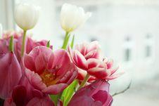 Free Pink Tulip Flowers Royalty Free Stock Photos - 117768088
