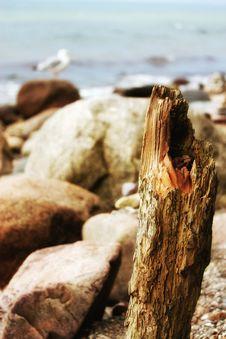 Free Rock, Wood, Shore, Driftwood Stock Photography - 117788042