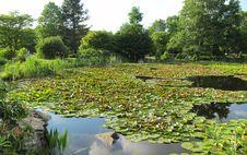 Free Vegetation, Botanical Garden, Water, Nature Reserve Stock Images - 117788124