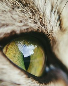 Free Eye, Whiskers, Cat, Fauna Stock Photography - 117788242