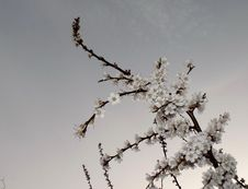 Free Branch, Blossom, Sky, Twig Royalty Free Stock Photos - 117788338