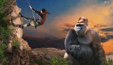 Free Mammal, Primate, Great Ape, Tree Stock Images - 117788634