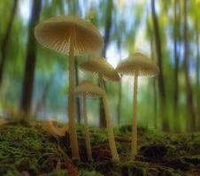 Free Mushroom, Fungus, Edible Mushroom, Biome Royalty Free Stock Photo - 117788815