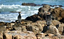 Free Fauna, Bird, Flightless Bird, Penguin Stock Image - 117789051