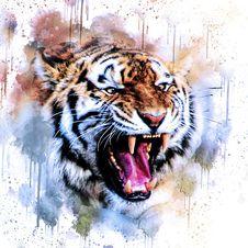 Free Tiger, Wildlife, Mammal, Roar Stock Photography - 117789212