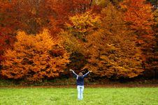 Free Wow, Autumn Stock Image - 11781801
