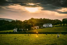 Free White Sheep On Field During Golden Hour Time Stock Photography - 117852712