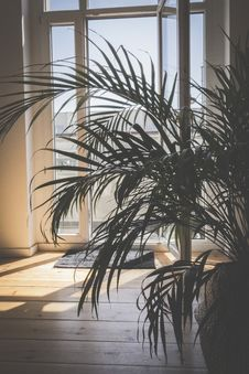Free Green Palm Plant Inside Room Royalty Free Stock Images - 117852769