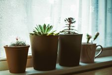 Free Four Assorted-color Plants On Pots Near Window Royalty Free Stock Photos - 117852878