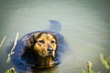 Free Photo Of Dog On Water Royalty Free Stock Photography - 117852897