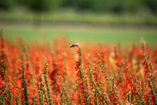 Free Red Petaled Flower Field At Daytime Stock Photography - 117852932