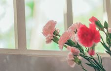 Free Pink Petaled Flower Near Glass Window Stock Photos - 117852933