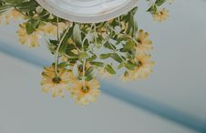 Free Low Angle Photography Of Petaled Flowers On White Ceramic Pot Royalty Free Stock Photos - 117852938