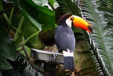 Free Black And White Bird On Gray Concrete Bird Royalty Free Stock Images - 117852939