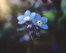 Free Selective Focus Photography Of Blue Petaled Flowers Royalty Free Stock Images - 117852959