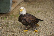 Free Bird, Eagle, Bird Of Prey, Beak Stock Image - 117884411