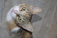 Free Cat, Face, Small To Medium Sized Cats, Cat Like Mammal Royalty Free Stock Photography - 117884627
