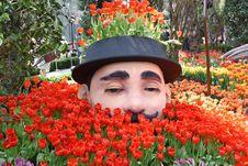 Free Flower, Plant, Flowering Plant, Botanical Garden Stock Image - 117884711
