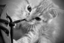 Free Cat, Whiskers, Black And White, Face Royalty Free Stock Image - 117884736