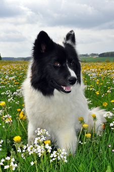 Free Dog, Dog Like Mammal, Dog Breed, Mammal Royalty Free Stock Photography - 117884827