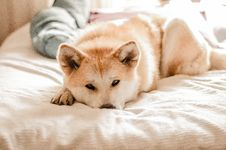 Free Dog, Dog Like Mammal, Dog Breed, Dog Breed Group Stock Photos - 117884873