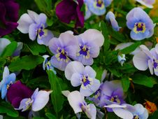 Free Flower, Blue, Plant, Flowering Plant Stock Photography - 117885352