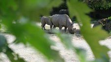Free Wildlife, Fauna, Terrestrial Animal, Rhinoceros Stock Photography - 117885362