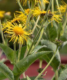 Free Flower, Plant, Flora, Sow Thistles Stock Photos - 117885373