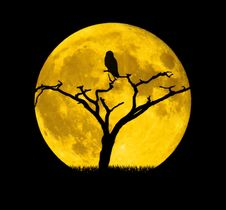 Free Yellow, Full Moon, Moon, Sky Royalty Free Stock Photos - 117885618