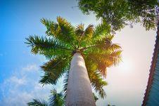Free Sky, Tree, Palm Tree, Arecales Royalty Free Stock Photos - 117886088
