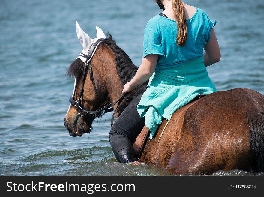 Horse, Horse Like Mammal, Rein, Horse Tack