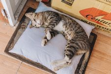 Free Brown Tabby Cat Lying On Grey Throw Pillow Stock Photo - 117917290