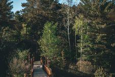 Free Green Forest Near Bridge Royalty Free Stock Photos - 117917338