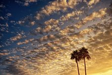 Free Low Angle Photography Of Palm Tree Under Cloudy Sky During Golden Hour Stock Images - 117917354