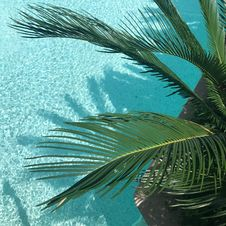 Free Green Palm Tree Stock Photos - 117917423